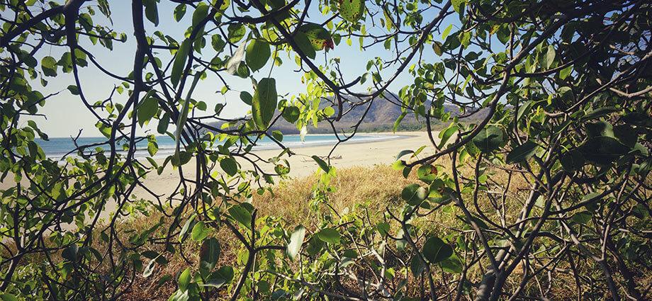 costa rica bushes