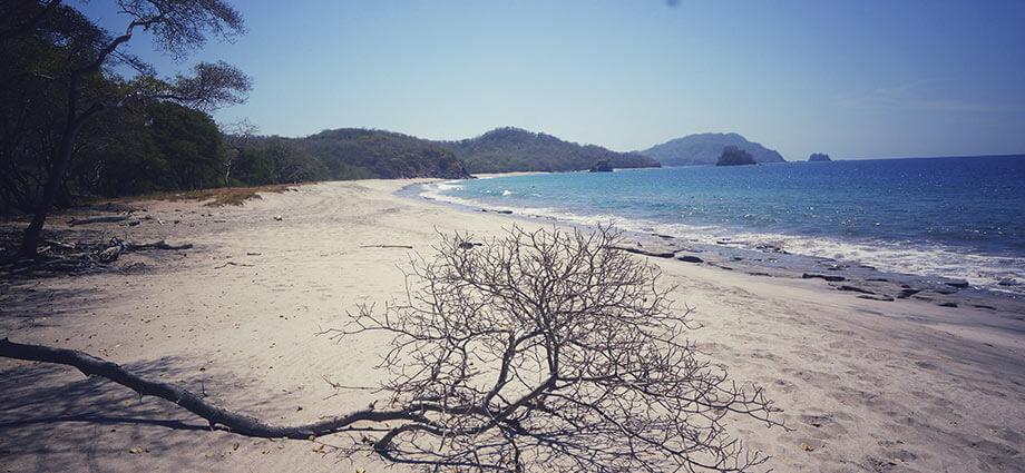 playa nombre de jesus beach in costa rica tree